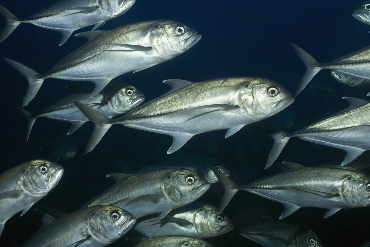 How to detox successfully k w homeopathic medicine and for How does mercury get into fish